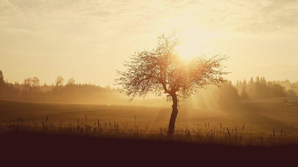 sunrise-sun-skies-nature-163391